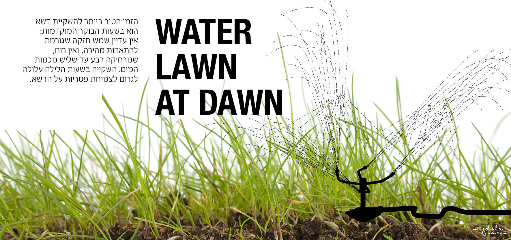 WATER LAWN AT DAWN